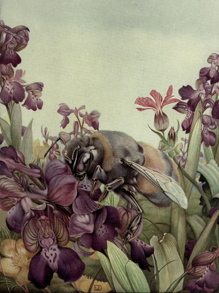 bumblebee illustration purple flowers