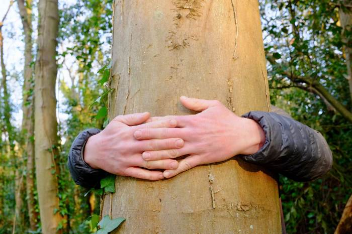 hands around tree trunk