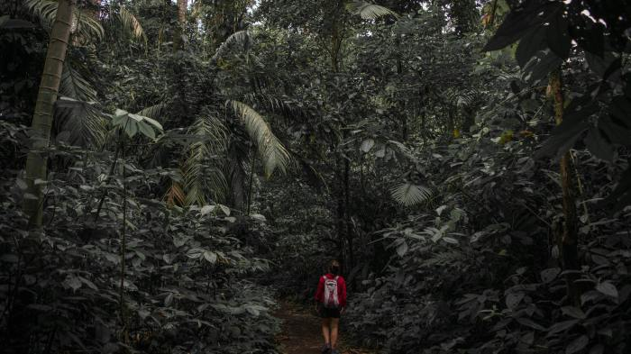 man standing in rainforest setting