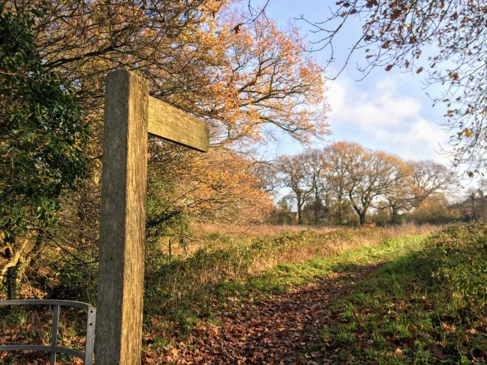 signpost, path, trees, sky