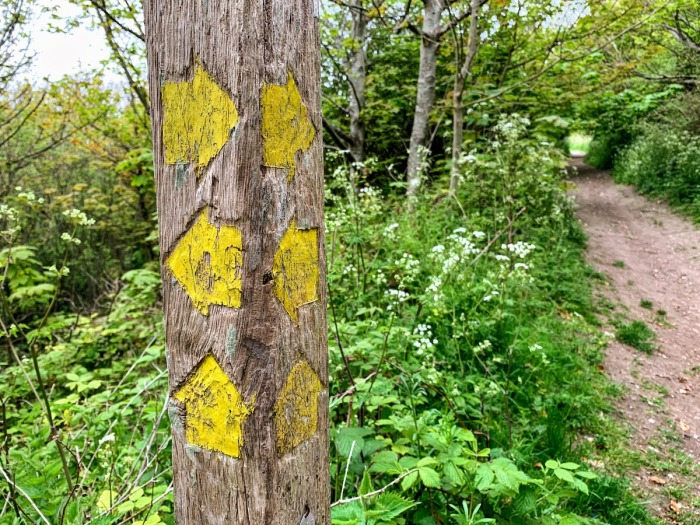 signpost in woodland plants path